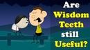 Are Wisdom Teeth still Useful? | aumsum kids education