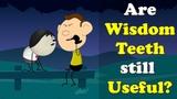 Are Wisdom Teeth still Useful #aumsum #kids #education