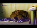 Собака Бусинка летит в Перу
