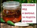 Целебные свойства зеленых шишек сосны когда и как собирать Сосновый мед и лечебное сосновое варень