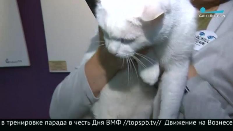 Ахилл Кот предсказатель