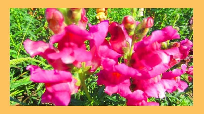 Городские цветы Этот прекрасный мир🌺 🌸 🌼