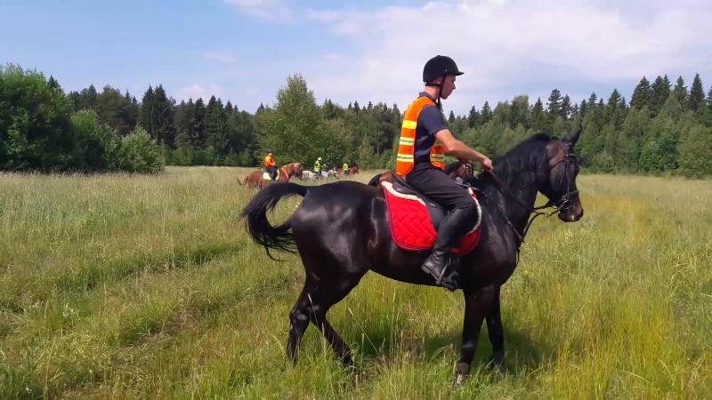 Совместные учения конного подразделения июнь 2018 года Одинцовский район Московской области