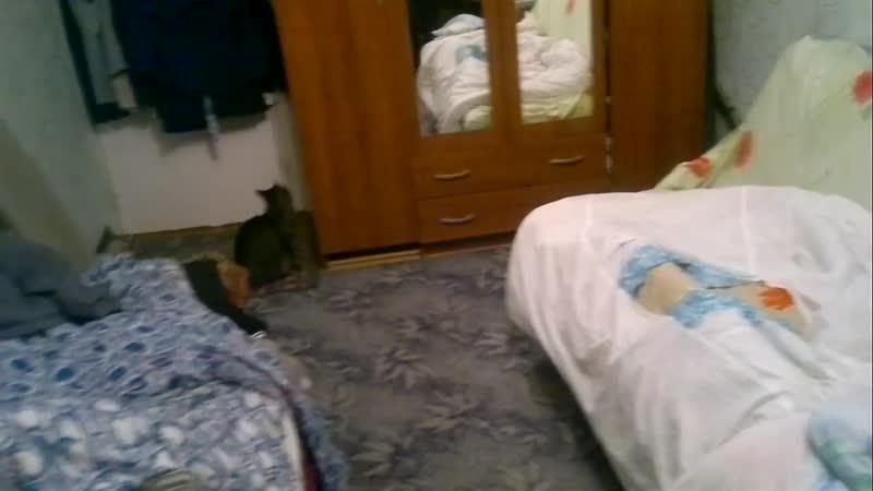 Кот террорист держал в заложниках трех человек