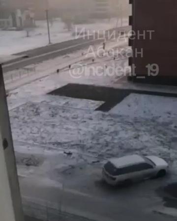 нападение стаи собак в Черногорске