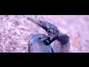 Печальная мелодия (клип) - Вячеслав Лазаренко (Омск) - Плач по миру (2017) - (му