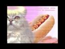 Ninety-nine cats - Мясо! На Дискотеке.