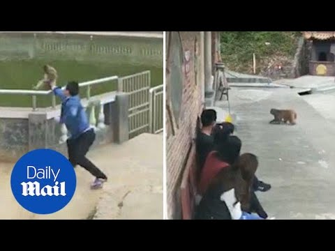 Prankster is chased by monkey after pushing it into pond - Daily Mail