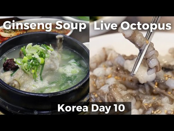 Live Octopus Chicken Ginseng Soup Day 10