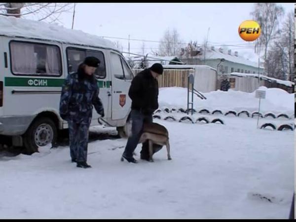 Служебные собаки УФСИН