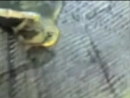 Трилобит, пойманный в Капчагае