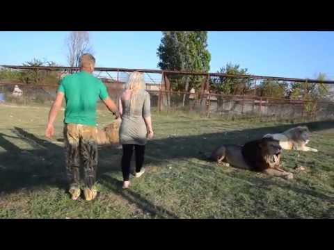 Львица Лейла изображает из себя перевернутую на панцирь черепаху :))
