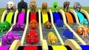МУЛЬТИК ВОЛШЕБНЫЙ БАССЕЙН Дикие животные меняют цвет РАЗНОЦВЕТНЫЕ КОРОВЫ на английском для детей