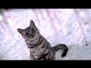 Реклама Whiskas _ Вискас Новогодняя - Такого снегопада