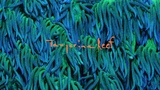 Tangerine Reef - The Audiovisual Album by Animal Collective &amp Coral Morphologic (Official Film)