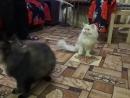Мурзик и Люся