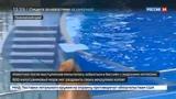 Новости на Россия 24 В Приморском океанариуме тренер избил моржа Мишу