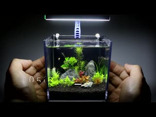 The worlds smallest plant aquarium
