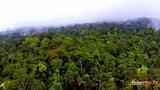 ТОП Скрытий мир. Звуки тропических джунглей в замедленном воспроизведении напоминают молитвы монахов