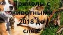 Приколы с животными 2018 до слез!