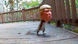Donald Trump Squirrel Feeder