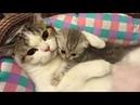 Essayer De Ne Pas Rire - Vidéos Drôles de Chats et de Chiens 3