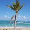 """Stanislav Grinik on Instagram """"На пляже Lavocama готовят вкуснейшую паэлью . Хорошая компания , бриз окена и день удался 😋🤗😍 playa paella beach..."""
