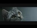 Реклама Whiskas _ Вискас - Кот и кран