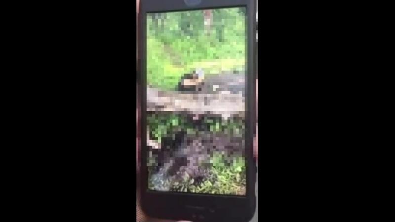 Я его отпинал ногами и кинул в болото в Ленобласти подростки сняли на камеру жестокое избиение школьника