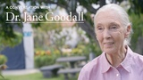 A Conversation with Dr. Jane Goodall EF Educational Tours