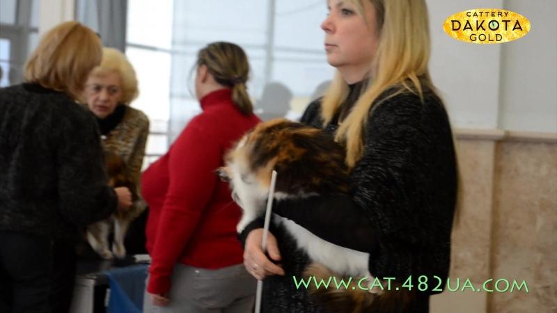 Выставка кошек Winner Cat, Харьков 04-05 02 2017 3 часть