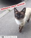 Диана Дианова фото #15