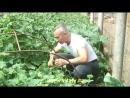 Доктор Попов-лечение гемороя огурцом.mp4