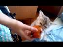 Мой зверок кушает хурму