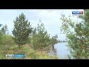 Свой профессиональный праздник отметят лесоводы Тверской области