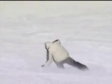 Трюки на сноублейдах (snowblades, skiboard, bigfoot)