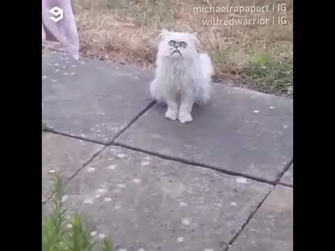 Hilarious! Man scared of strange looking cat.