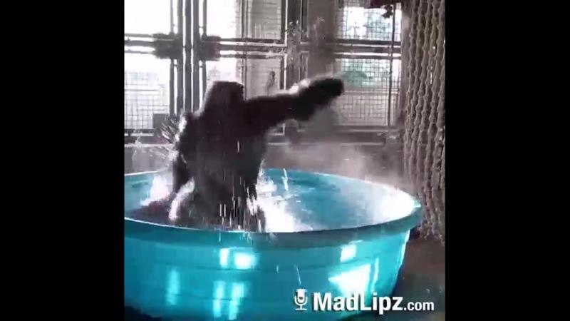 обезьяна ебашит лезгинку