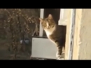 9 Lives Parkour Cat 1