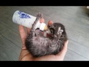 ♥Cute and Funny Pets 9 - Cute Dogs and Cats Doing Funny Things♥