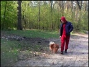 Картинки и звуки в лесу 24 Apr 2019 Vesna