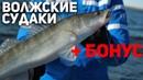 РАЗДАЧА Волжских судаков БОНУС Рыбий жЫр 5 сезон выпуск 30