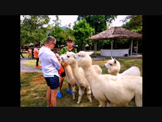 Альпака парк и земля королей  Тайланд декабрь 2018г