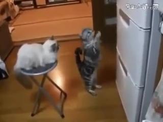Холодильник, ты могуч!  Ты гоняешь мяса - ТУЧ!  НЕ откажешь нам в ответе!...  По сосиске...Мне и Феде!