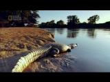 Тираннозавр: чемпион по выживанию Оригинальное название: T.Rex: Ultimate Survivor