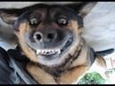 Смешные собаки Приколы про животных 1