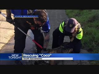 Dog rescued after 5 months stuck in a drainage ditch
