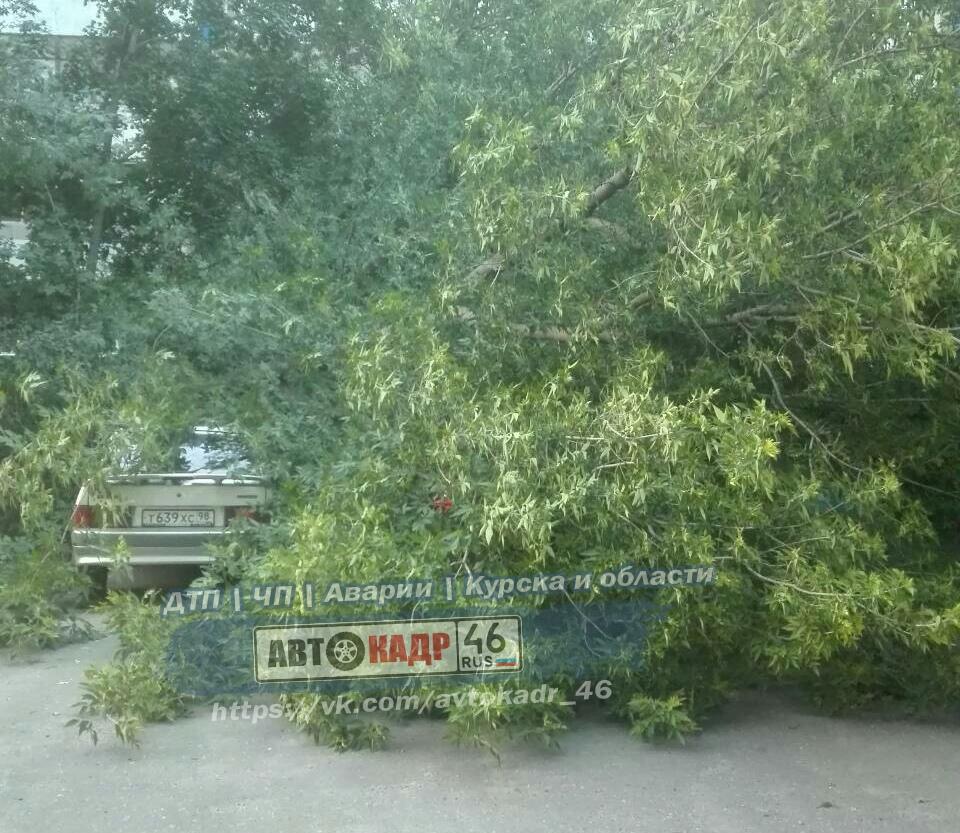 В Курске дерево рухнуло на две машины