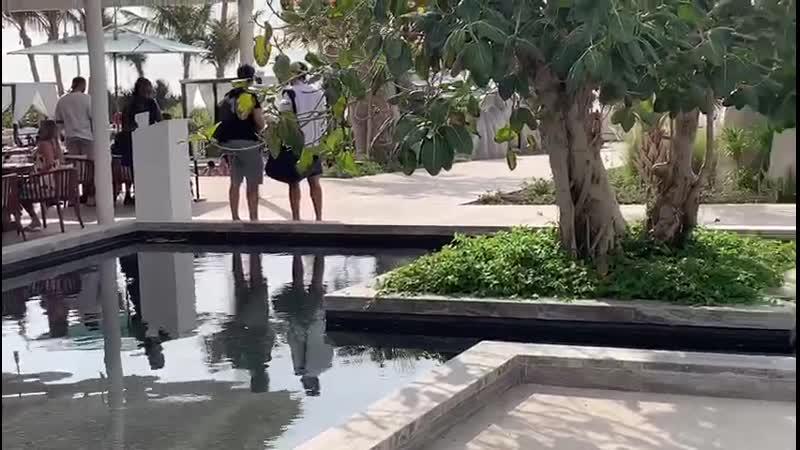Cove beach dubai Дубай Ков бич