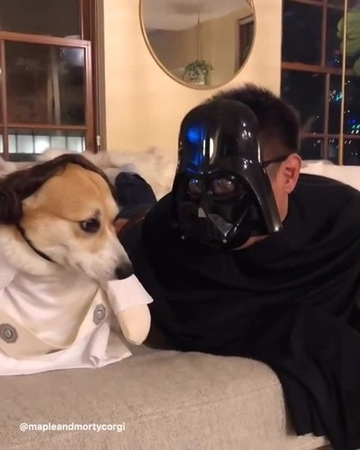 I'm your father. Nooooooooo. 😂😂😂